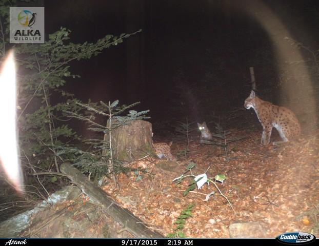 Máma hlídá nezbedná mláďata. Archiv ALKA Wildlife